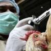 Mortal virus mutante de gripe aviaria