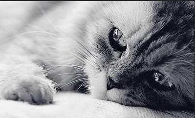Gato triste