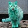 gato verde