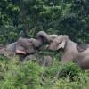 Dos elefantes (AFP/Archivos | Diptendu Dutta)