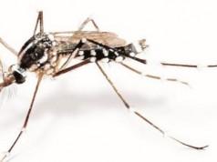 El Zika se esconde en la vagina días después de la infección