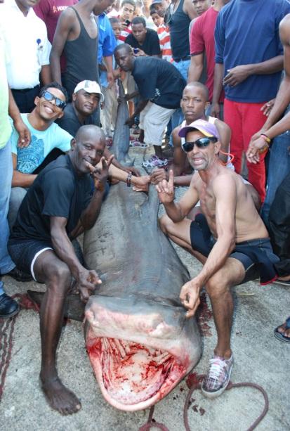 Tiburon A