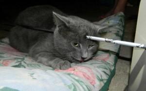 gato flecha