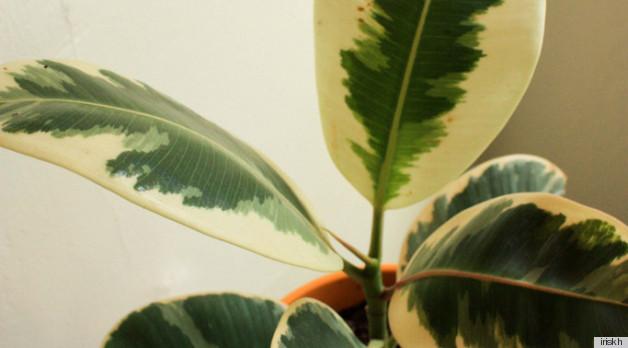 Fertilizante de plantas